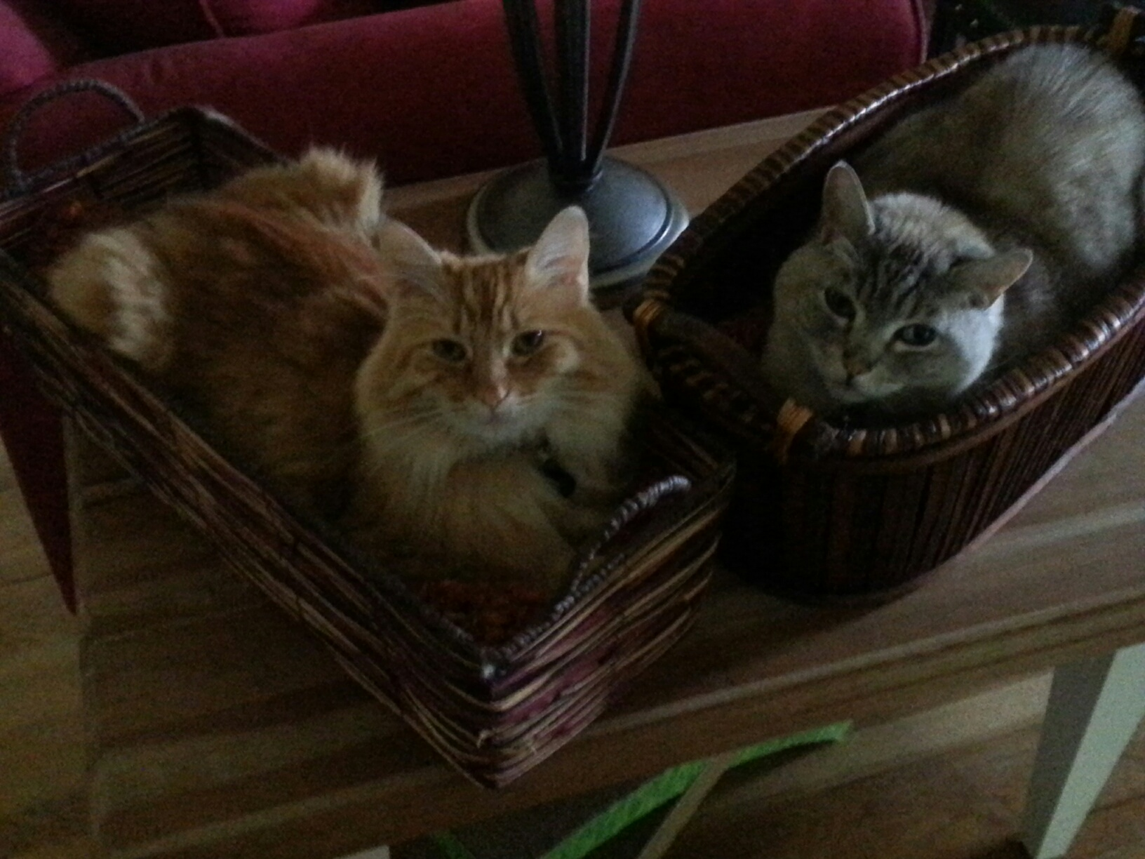 Cats in baskets 1.jpg